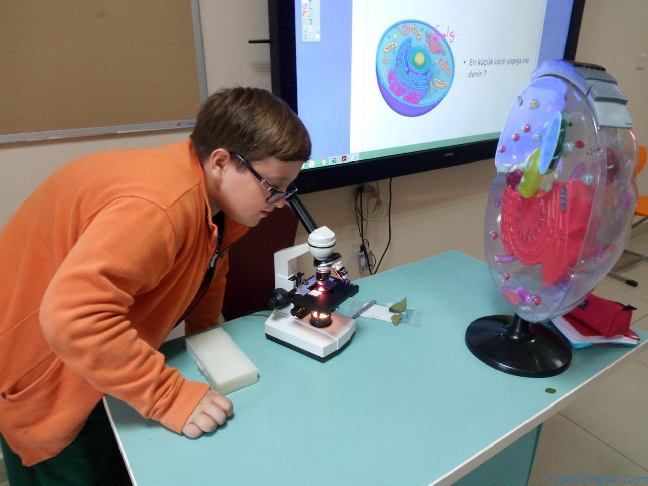 mikroskop hücre ile ilgili görsel sonucu